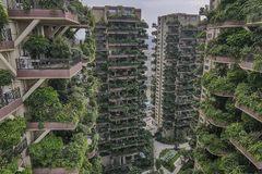 В Китае провалился проект жилого комплекса с «вертикальным лесом»