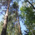 Земля под ИЖС, Новодарьино