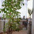 2-комнатная квартира, НИЖНЕВАРТОВСК, 60 ЛЕТ ОКТЯБРЯ ,19А